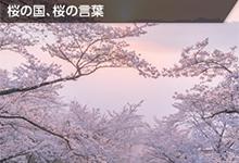 桜の国、桜の言葉