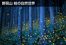 野見山 桂の自然世界